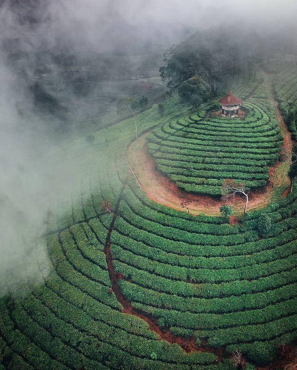 Gunung Nini Perkebunan Teh Malabar Pangalengan Paintball Pemandangan Kebun