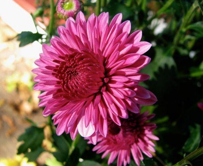 Daftar Nama Bunga Gambar Bunga Cantik Indah Unik Dan Langka Lengkap Dengan Penjelasannya Kumpulan Macam Macam Bunga Hias Terlengkap Ada Di Sini