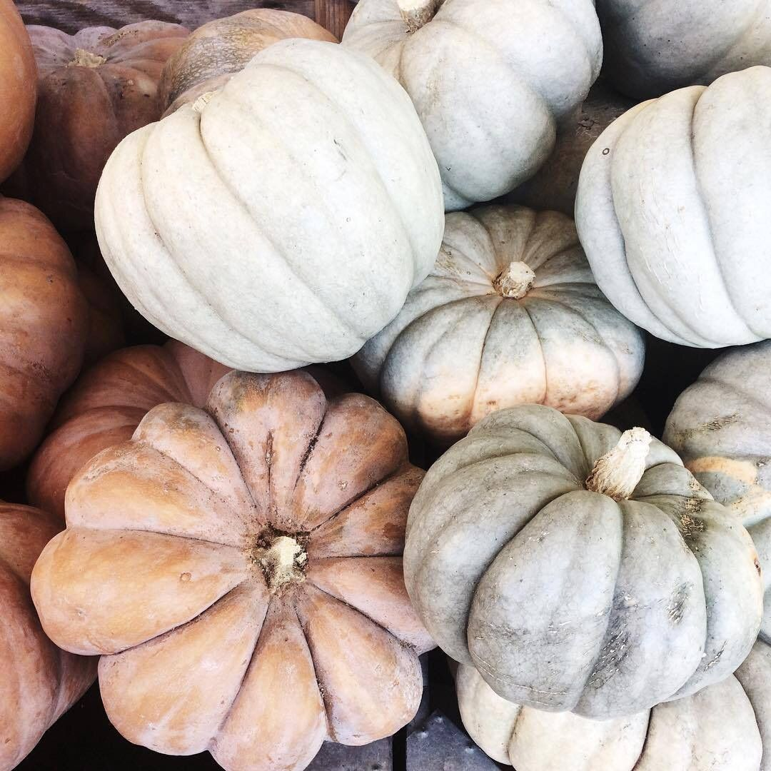 Gray and white pumpkins
