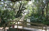 Emerson Point Preserve memories: biking with Zoe, picnic under canopy of live oaks, mysterious Indian mounds, hiking to the tower with a view of Tampa Bay, gumbo-limbo tree.