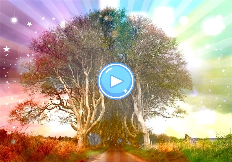 to The Dark Hedges Northern Ireland The Dark Hedges Northern Ireland A Entry to The Dark Hedges Northern Ireland The Dark Hedges Northern Ireland A  Love the staggered lo...