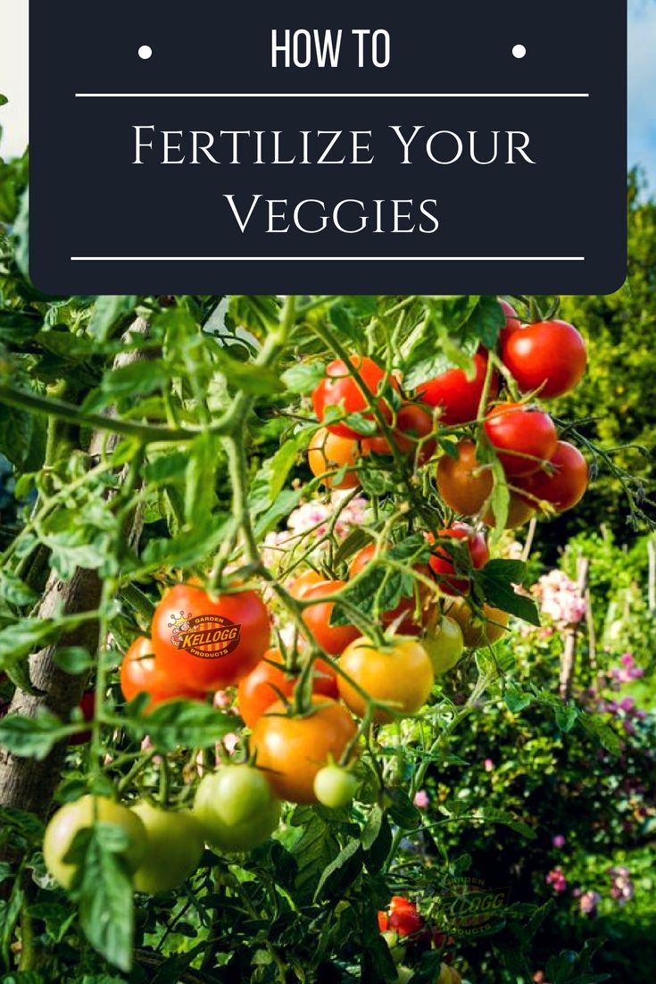 What Is The Best Organic Fertilizer For My Vegetable 400 x 300
