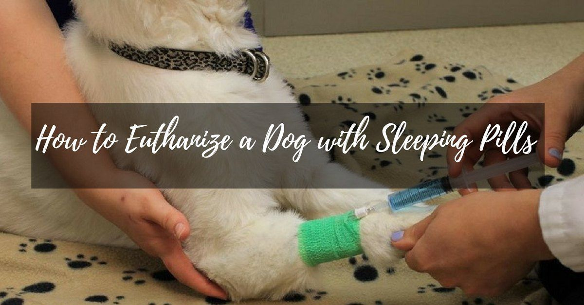 How To Euthanize A Dog With Sleeping Pills Puptipper Sleeping Pills Pills Sleep