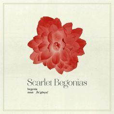 Scarlet Begonia Tattoo Google Search Begonia Xmas Gifts For Her Inspirational Tattoos