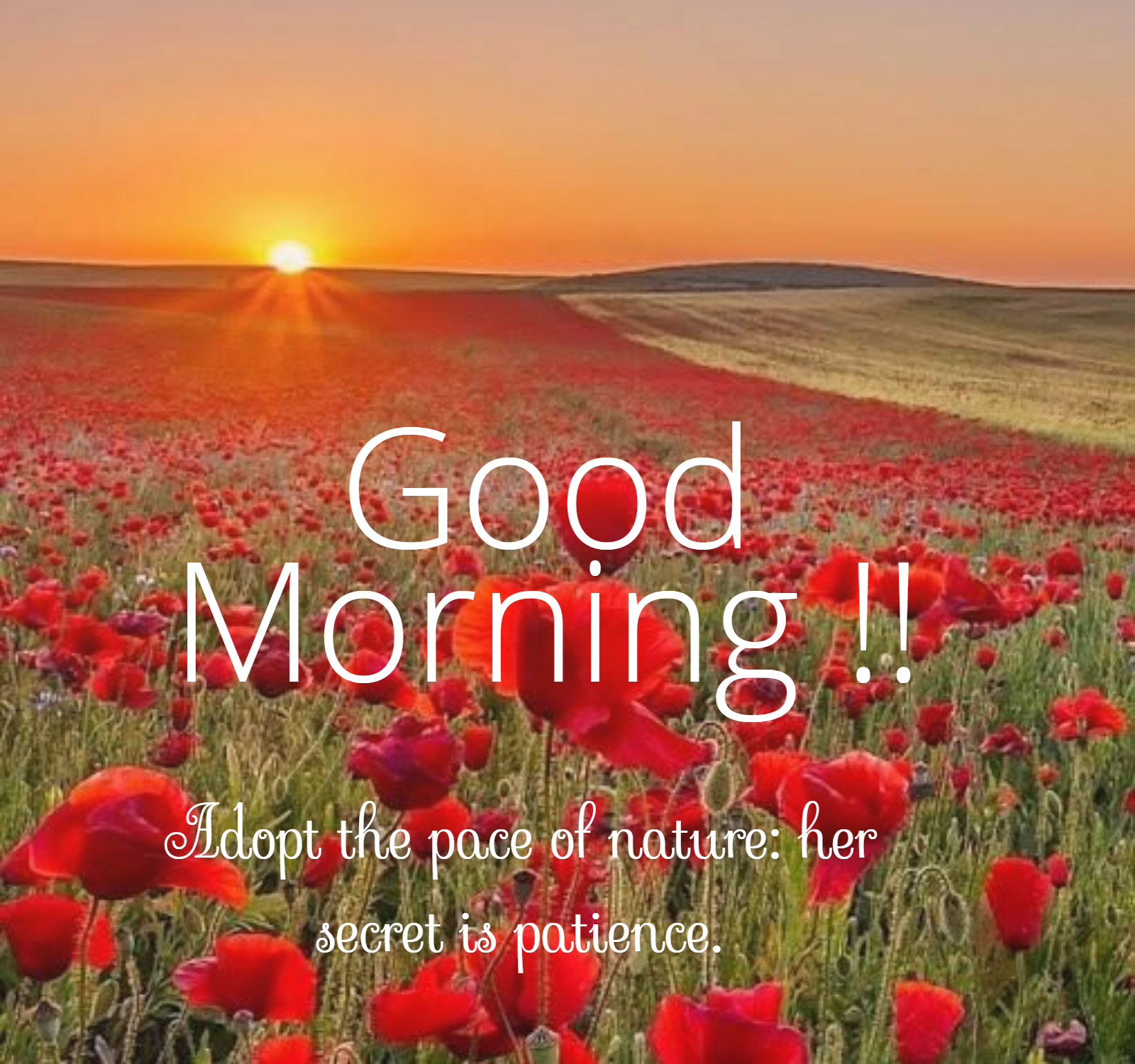 Adopt The Pace Of Nature Her Secret Is Patience Goodmorning Morning Morningquotes Goodmorn In 2020 Good Morning Nature Good Morning Nature Images Morning Images