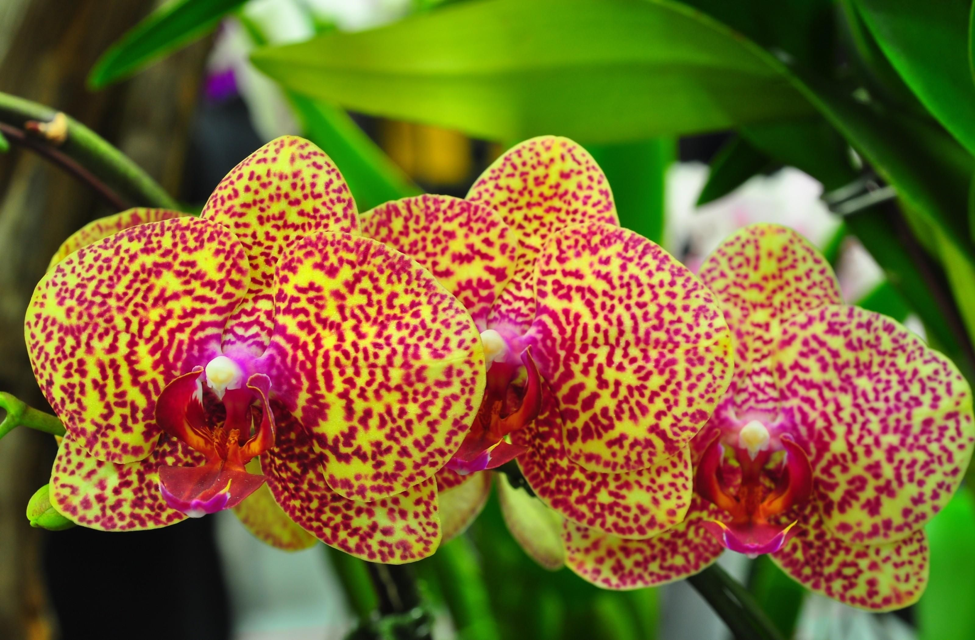 Download wallpaper orchids flowers spotted branch exotic hd
