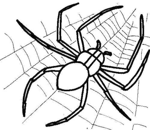 Merveilleux Spider Web And Spider Coloring Page