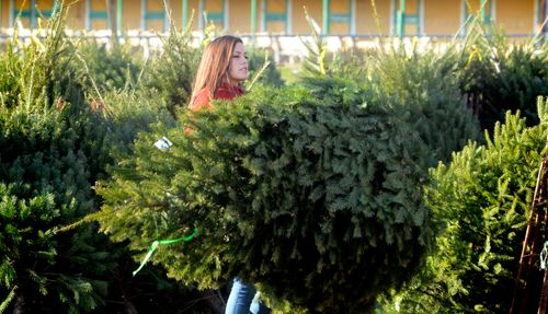 Christmas trees for your family and the troops http://ow.ly/fBDeg