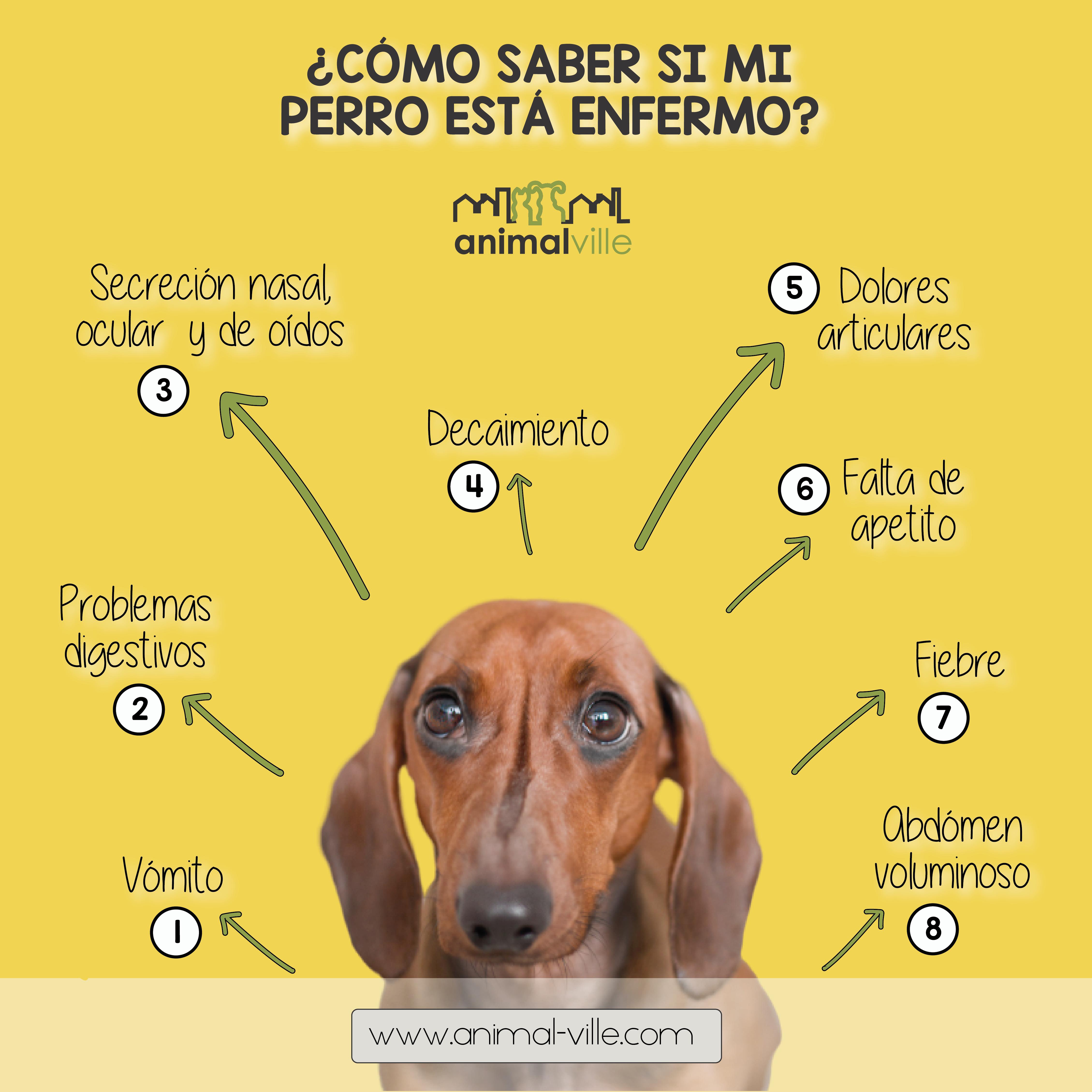 Mi Perro Esta Enfermo Memes Dogs Animals