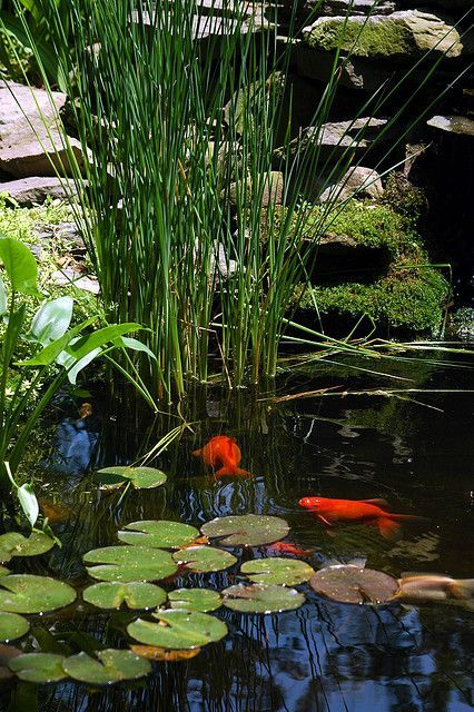 บ อบ ว เล ยงปลาคาร ฟ Fish Ponds Backyard Ponds Backyard Pond Design