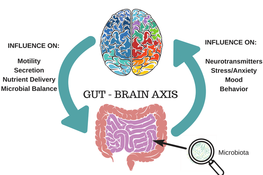 Image result for the gut brain connection