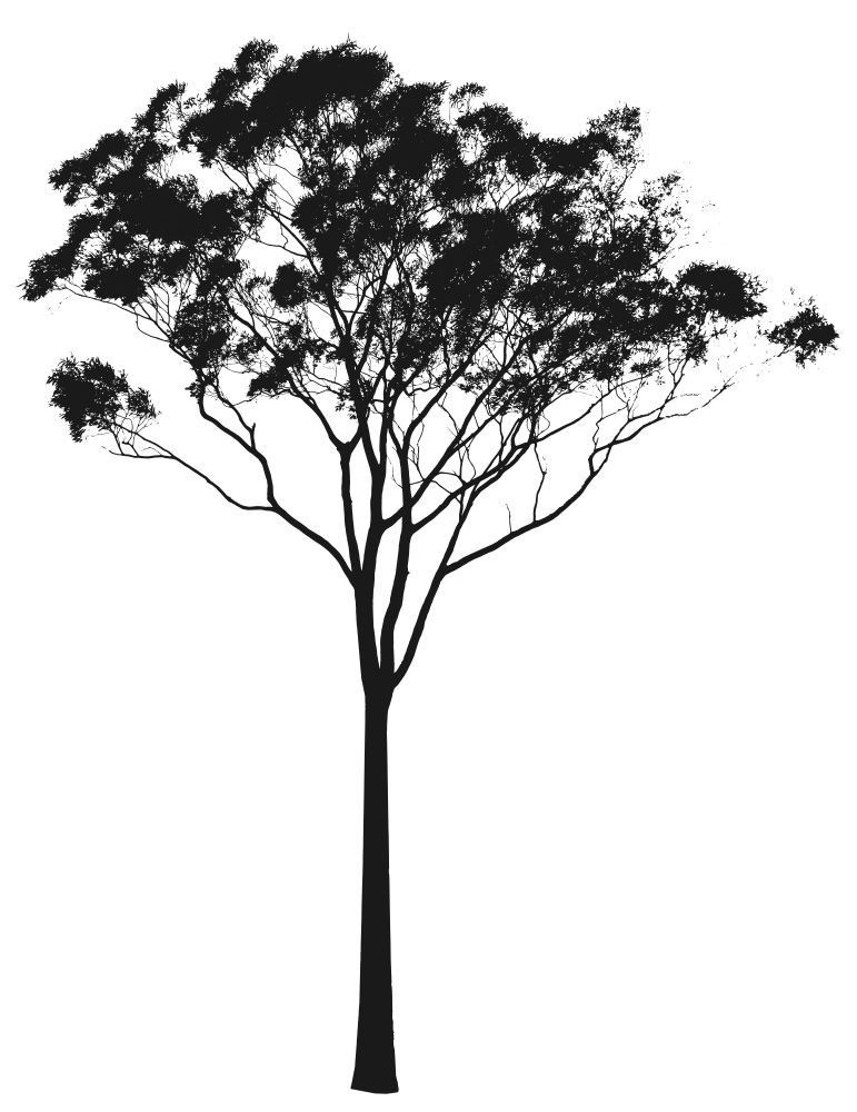 Eucalyptus Or Gum Tree Silhouette Australia Tree Photoshop Tree Silhouette Tattoo Tree Silhouette