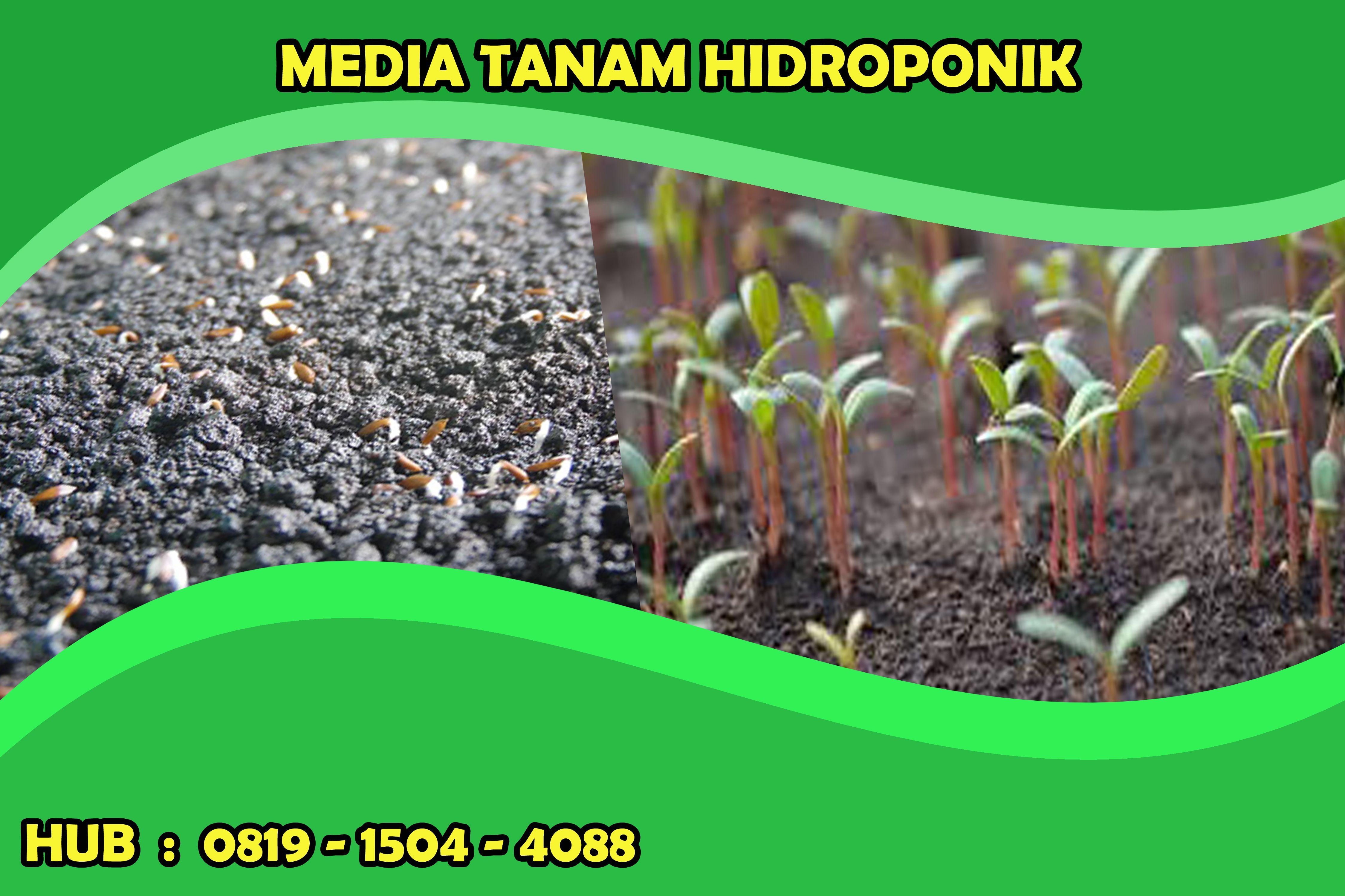 0819 1504 4088 Media Tanam Hidroponik Dengan Kerikil Media