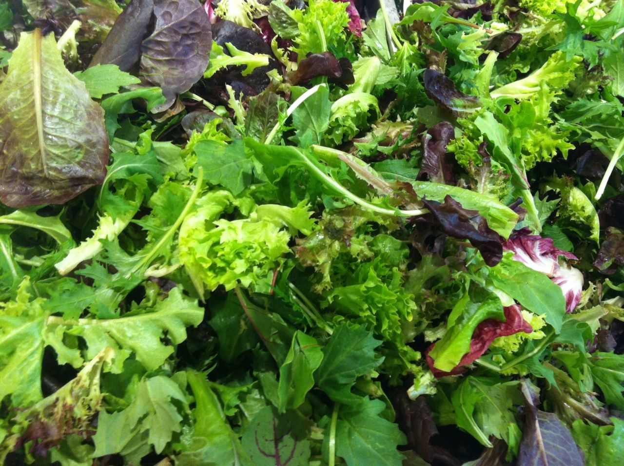 Lechuga Herbs, Vegetables, Celery