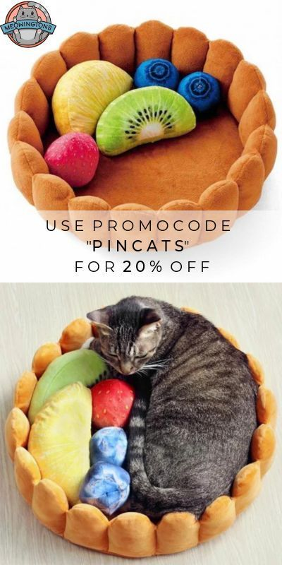 Fruit Tart Cat Bed - Funny Animal Quotes - #funnyanimals #funnyanimalsquote -  Sweet dreams are guaranteed with the fruit tart cat bed!