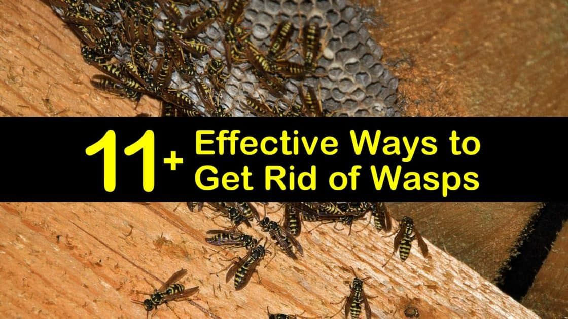 how to get rid of bees nest in tree