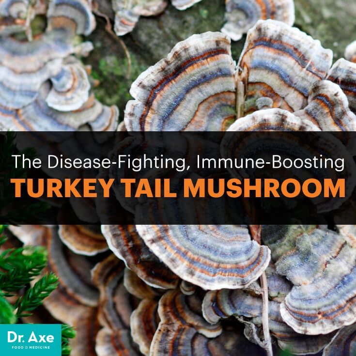 Turkey Tail Mushroom Benefits, Uses, Recipes, Immunity, Cancer - Dr. Axe