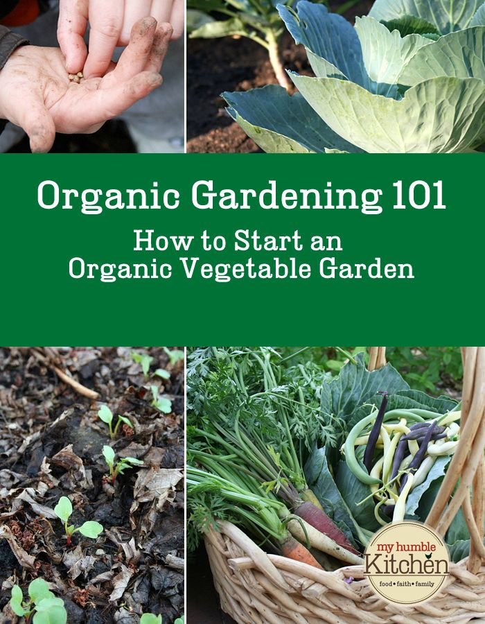 Organic gardening 101 how to start an organic vegetable for Starting a vegetable garden