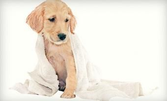 Only $19 for 3 Self-Serve Dog Washes at The Paw Patch Veterinary Hospital