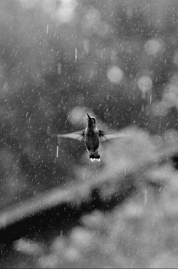 Mind Pausing Rain Photography Ideas - #Ideas #Mind #Pausing #photography #rain