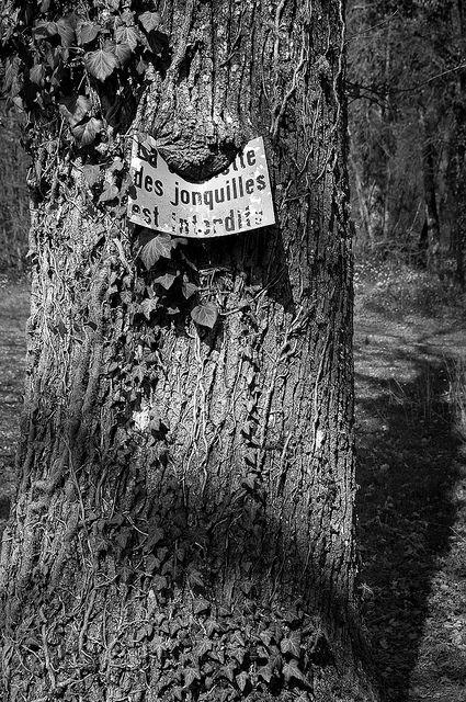 L'arbre qui mange les panneaux