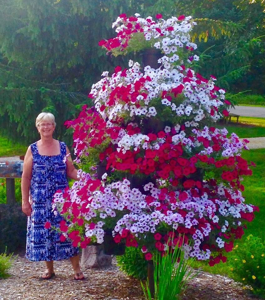 Our Petunia Tree Now Available For Sale Garden Lawn
