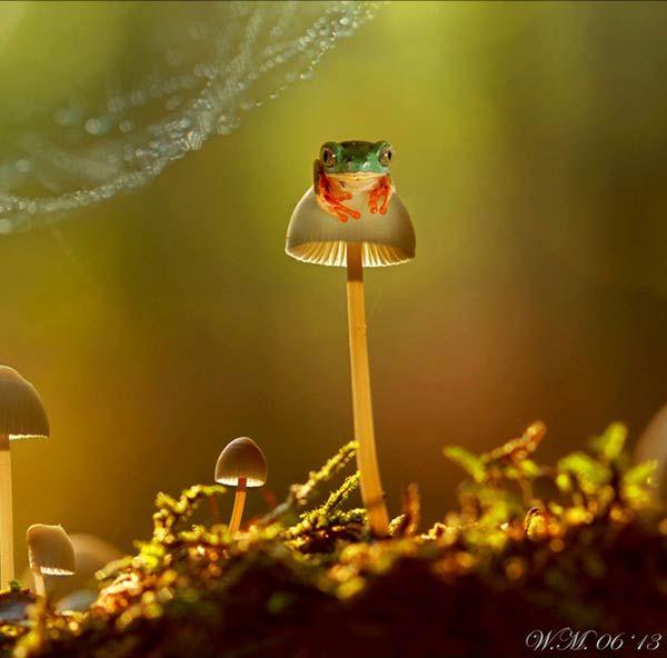 Ranita sobre un hongo