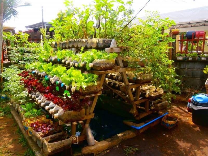 Charming Backyard Vegetable Garden Design Ideas Gallery