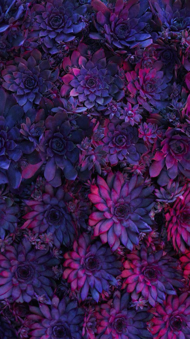 Nature wallpaper iPhone flowers Fondos de pantalla de