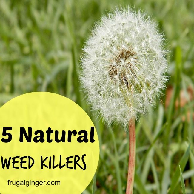 5 natural ways to kill weeds in your garden and lawn. Easy on your wallet too!