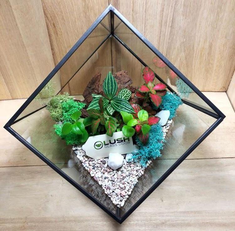 Jennett Garden Themed Tropical Fittonias Pilea Square Geometric