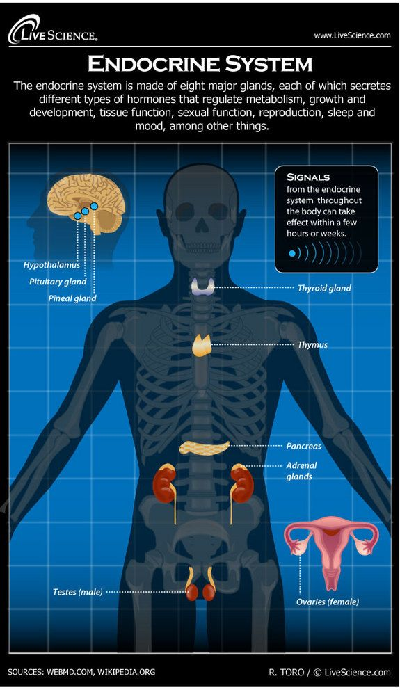 Diagram of the Human Endocrine System (Infographic) | Knowledge Bank ...