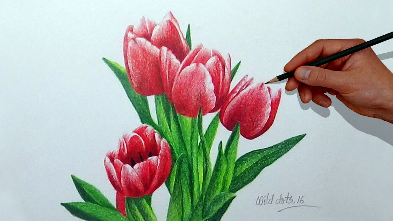 How To Draw A Flower With Simple Colored Pencils Tulip Youtube Flower Drawing Tulip Flower Drawing Pencil Drawings Of Flowers