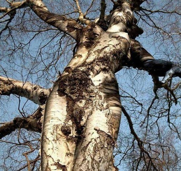 Beautiful woman tree
