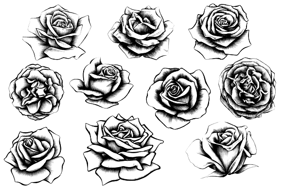 Pin By Allen Bishop On Tattoo Realistic Rose Tattoo Rose Illustration Tattoos