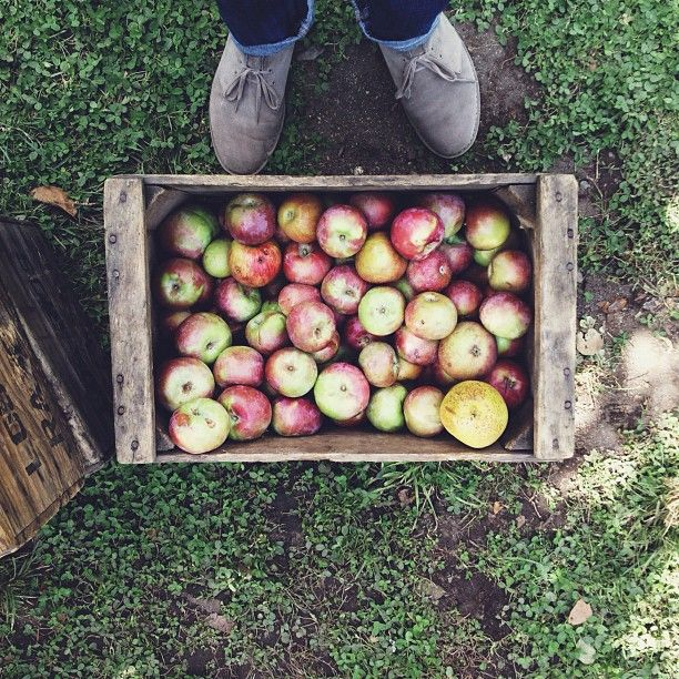 I need to go apple picking asap.