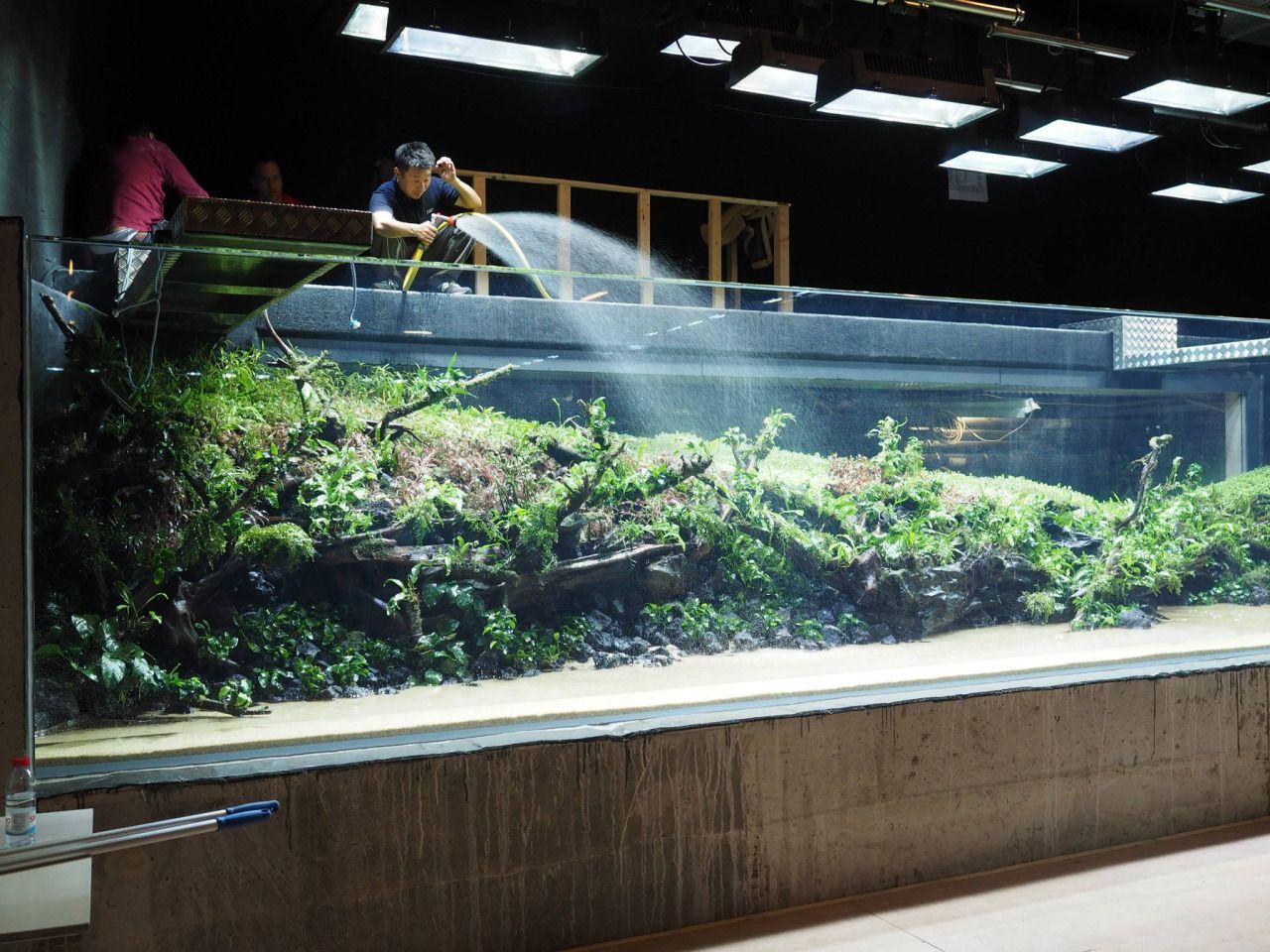 U201cThe Lisbon Aquarium Monster Tank U0027Sunken Forestu0027 By Takashi Amano U2014 In The