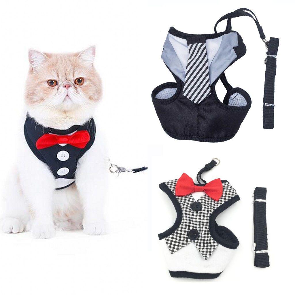 aime et partage si tu aimes harnais gilet smoking avec laisse pour chat et petit chien et chiot. Black Bedroom Furniture Sets. Home Design Ideas