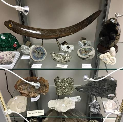 Visit Fossil Realm in Vaughan Ontario, GTA, to fin an extensive collection of fossils, minerals and natural history specimens. Pictured above: small mammoth tusks, rainbow pyrite, pyrite crystal cluster, polished malachite, septarian nodule egg and more!