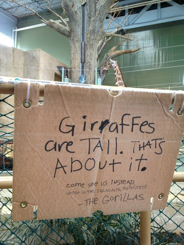 eric francis on zoo pinterest funny zoo animals and animals