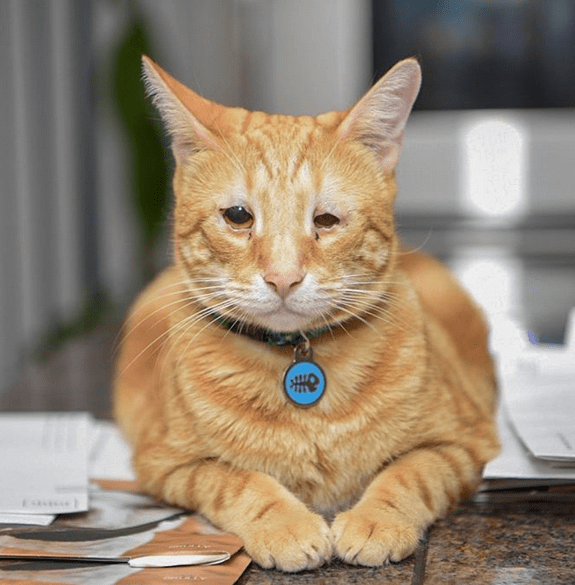 Meet The Incredibly Handsome Cat With Eyelid Agenesis Who Stole His Foster Mom S Heart And Now Helps Her Care For Kitties In Need Foster Mom Cats Orange Cats