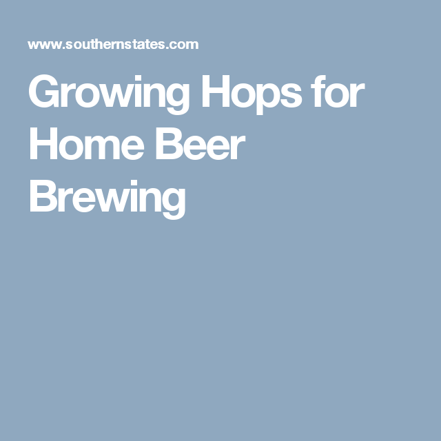 Growing Hops for Home Beer Brewing