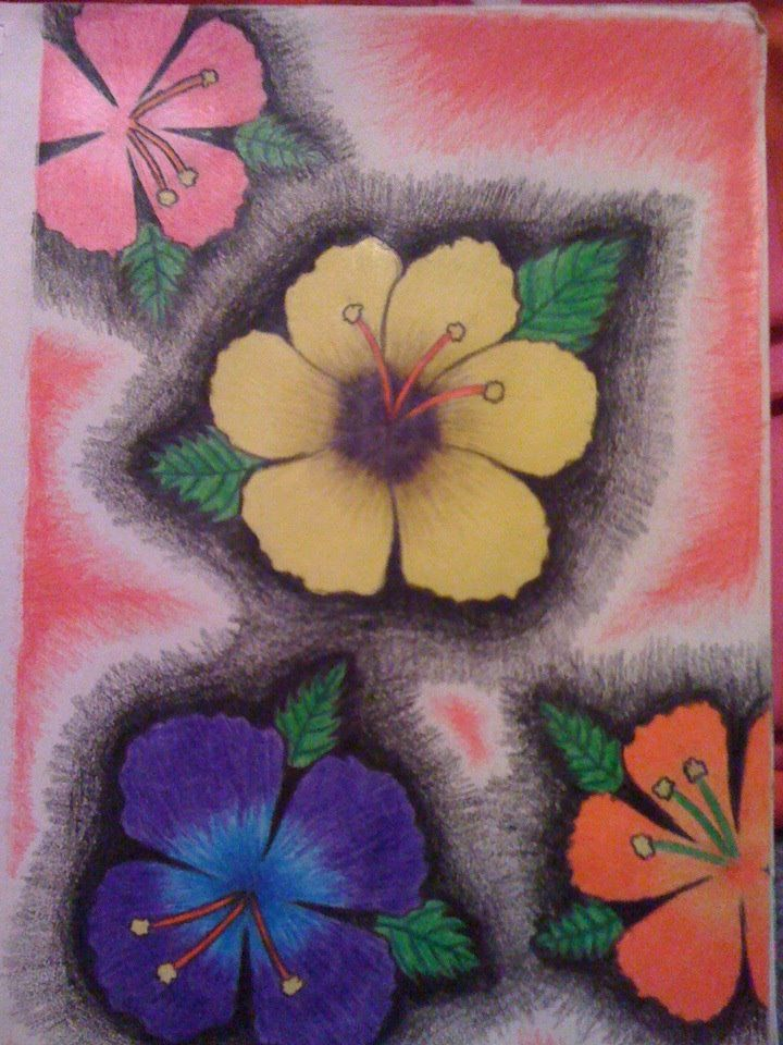 Colored Pencil Drawing Of Hibiscus Flowers Pencil Drawings Flower Sketches Colored Pencil Drawing