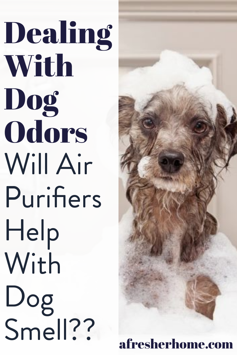Dealing With Dog Odors Will Air Purifiers Help With Dog