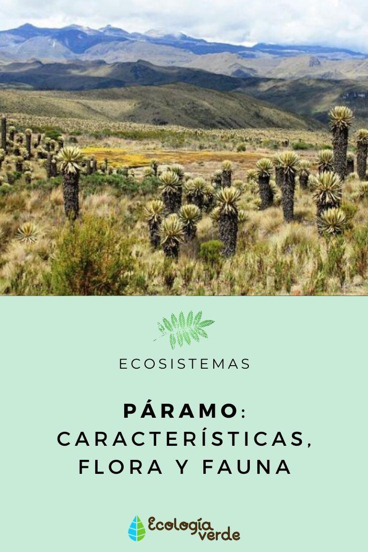 Páramo Características Flora Y Fauna Ecosistemas Paramo Paisaje Tropical