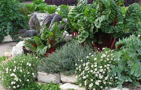 ten plants for edible landscapes the prepper journal edible