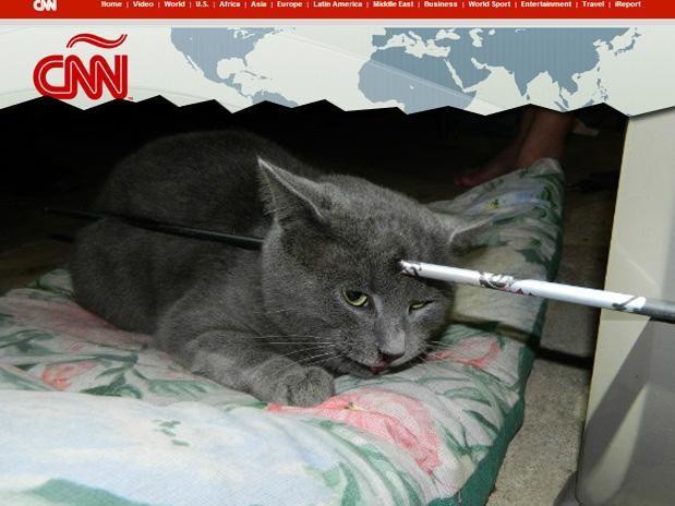 EUA: gato sobrevive após flecha atravessar seu crânio