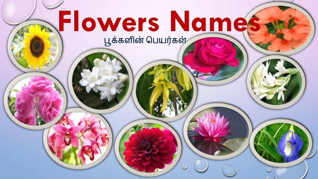 Pin By Sitewall Flower On Flower Wall In 2020 Flowers Name List Flowers Name In English
