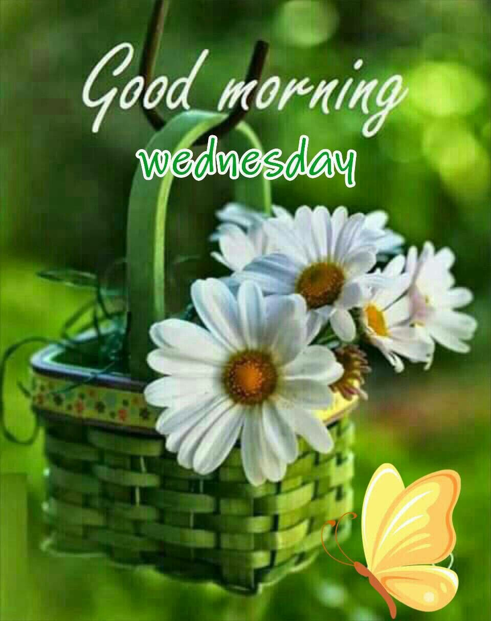 Image result for good morning wednesday
