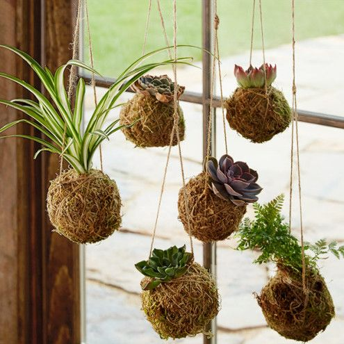 Kokedama Hanging String Gardens - Succulents - Plants ...
